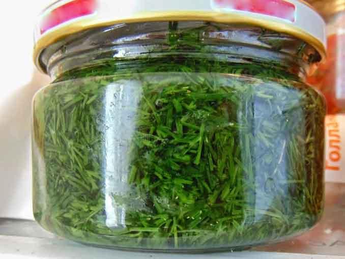 Как сохранить свежую зелень с маслом в банке на зиму