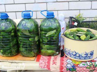 Как засолить огурцы в пластиковой бутылке